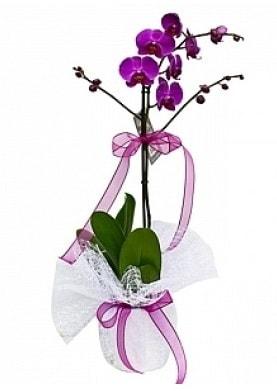 Tekli Mor Orkide  Çanakkale internetten çiçek siparişi