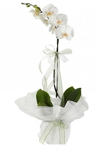 Tekli Beyaz Orkide  Çanakkale 14 şubat sevgililer günü çiçek