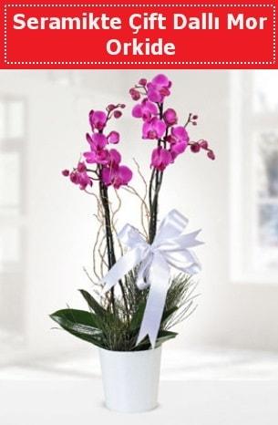 Seramikte Çift Dallı Mor Orkide  Çanakkale çiçek gönderme sitemiz güvenlidir