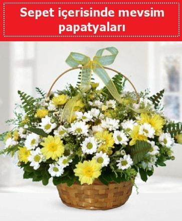 Sepet içerisinde mevsim papatyaları  Çanakkale uluslararası çiçek gönderme