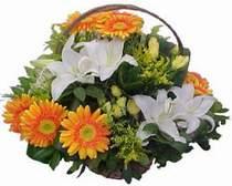 Çanakkale çiçekçi mağazası  sepet modeli Gerbera kazablanka sepet